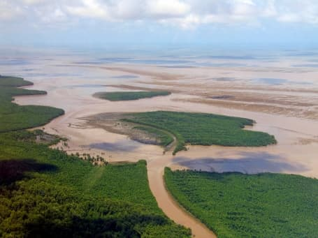 Litoral tipic, cu mangrove