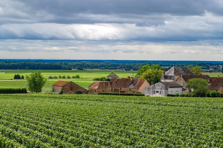 Podgoriile Aloxe-Corton din Saône et Loire